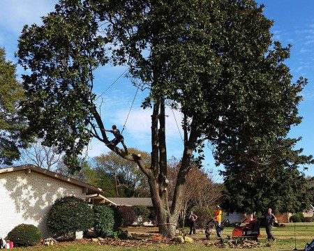 High-Risk Tree Removal