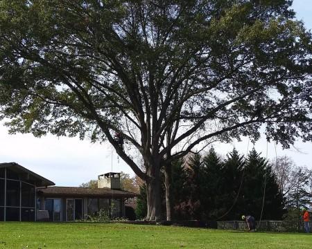 Tree Health Consultations